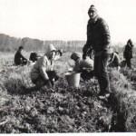 1985 Випуск 1985, 10 A на бригада за картофи през 1984